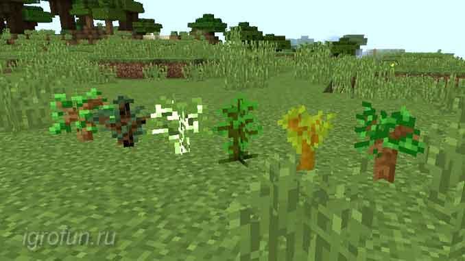 Саженцы — дуб, ель, береза, тропическое дерево, акация и темный дуб (по порядку)